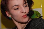Ручной попугай - лучший подарок к Новому году